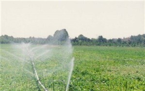 معاون جهاد کشاورزی :  کشاورزان یزدی ۵۱۰ میلیارد ریال کمک بلاعوض دریافت کردند