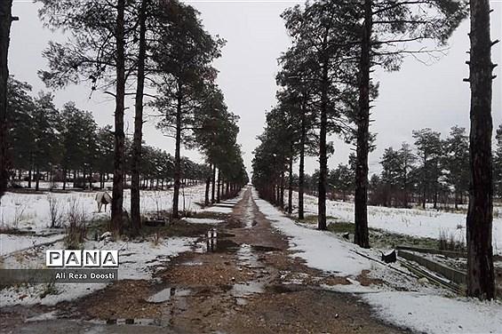 بارش نخستین برف زمستانی در شیراز