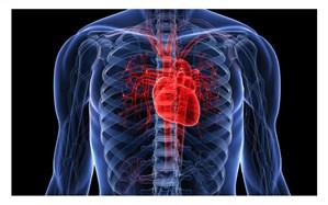 بیماریهای قلبی عروقی عامل بیش از 43 درصد از مرگ و میر زنجانیها