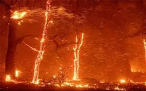 آتشسوزیهای بزرگ جهان در سالهای ۲۰۱۸ و ۲۰۱۹+ اینفوگرافیک