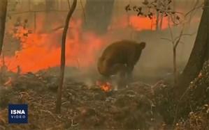 آتشی که نیم میلیارد جان را گرفت+ویدئو