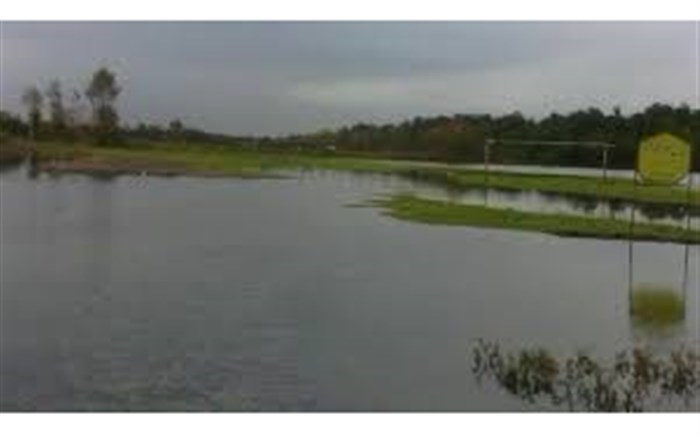 تالاب جوکندان از زیستگاههای مهم پرندگان مهاجر گیلان است