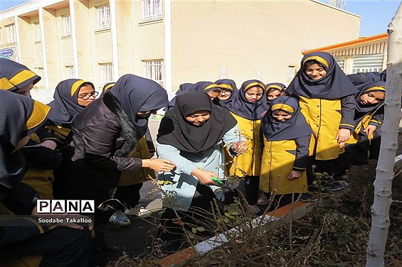 اجرای طرح مدرسه سبز در دبستان شاهد ٢ ملایر