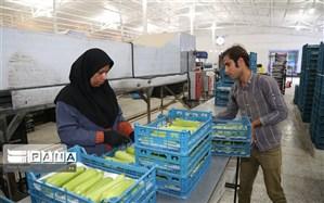 معاون استاندار لرستان: سلسله (الشتر) رتبه نخست جذب تسهیلات اشتغال روستایی را در لرستان دارد