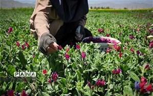 رشد ۱۴۳ درصدی کشت گیاهان دارویی در فارس
