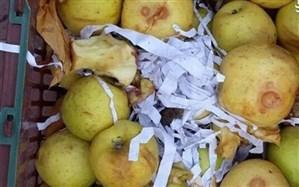 40 هزار تن سیب در آذربایجان غربی در معرض فاسد شدن