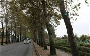 امسال ۲۵۰۰۰ اصله درخت درشهرستان سلماس پلاک کوبی شده است
