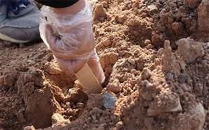 یک هکتار بادام کاری در کوهپایه های کاشان انجام شد