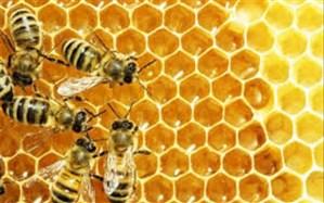 تریلی که عسل تولید میکند!