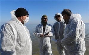 معاون سازمان حفاظت محیط زیست از تالاب میانکاله بازدید کرد