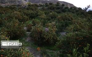 ۲ روستای الیگودرز هدف گردشگری شد
