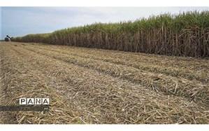 کوچک سازی زمینهای زراعی، بزرگترین تهدید کشاورزی لرستان
