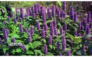 تکمیل باغ گیاهشناسی خرمآباد، رونق اقتصادی را به دنبال دارد