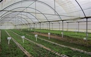 تکمیل گلخانه ۱۶۰۰ هکتاری پارس آباد با جدیت پیگیری می شود