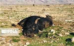 تفرجگاه نزدیک شیراز، همسایه با گاوان مردار