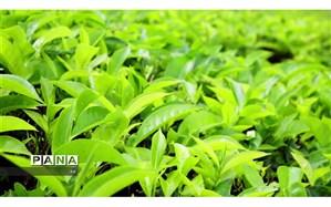 چه زمانی قابلیت جذب فسفر توسط گیاه بهشدت کاهش مییابد؟