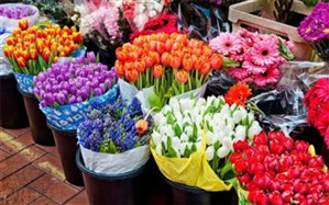 گرانی گل در آستانه روز زن