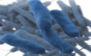 آیا بیماری طاعون نشخوارکنندگان به انسان منتقل میشود