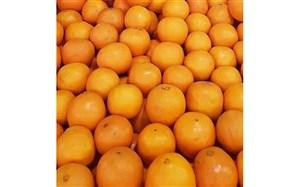 جهاد کشاورزی قیمت هر کیلو پرتقال تامسون را 4500 تومان تعیین کرد