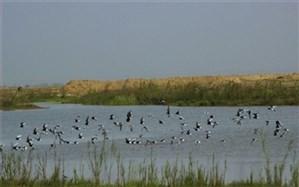 تالاب صالحیه زیستگاه پرندگان در فصل زمستان