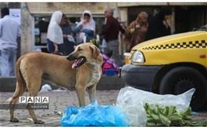 سگ ولگرد ۲ دانشآموز را در بندر ترکمن مصدوم کرد