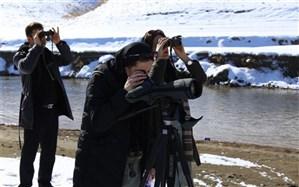 سرشماری حدود 30 هزار قطعه پرنده آبزی و کنار آبزی در استان تهران