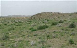 ظرفیت دام موجود در استان سمنان بیش از ظرفیت مراتع است