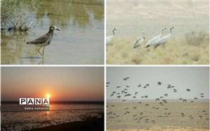 پرندگان مهاجر و بومی دوباره میهمان تالاب بندعلیخانورامین شدند