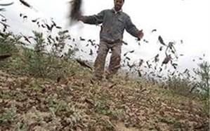 طرح پایش مبارزه با آفت ملخ در مراتع کهگیلویه و بویراحمد اجرا شد
