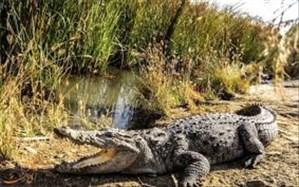 رییس اداره حفاظت محیط زیست شهرستان سرباز: نظارت برکه های زیست تمساح ها در حال انجام است