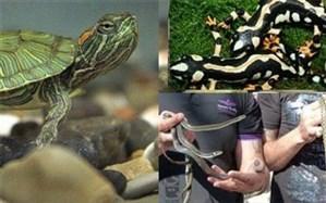 ممنوعیت خرید و فروش برخی گونه های جانوری و گیاهی در ایام پایانی سال