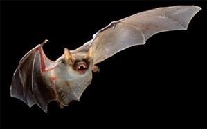 از نقش مار و خفاش در شیوع کرونا ویروس جدید تا واسطهگری مورچهخوار