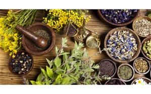 توسعه کشت گیاهان دارویی در آذربایجان غربی