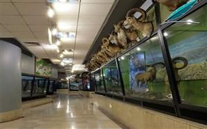 فردا بازدید از موزه تنوعزیستی پردیسان رایگان است