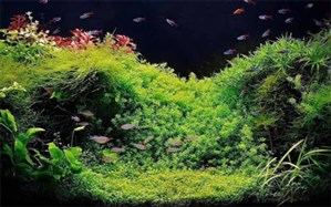 تکثیر و پرورش سالانه 10 میلیون قطعه ماهی زینتی درشرکت ماهیران اسلامشهر