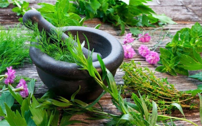تأثیر گیاهان دارویی در کاهش اضطراب