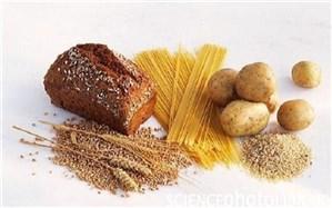 رژیم غذایی کم کربوهیدرات از تاثیر افزایش سن بر مغز پیشگیری می کند