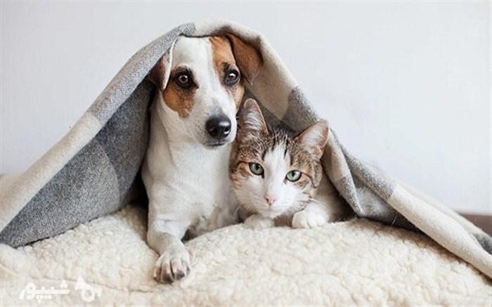 حیوانات خانگی قرنطینه شوند