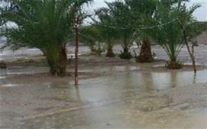 ورود سامانه بارشی شدید به استان بوشهر