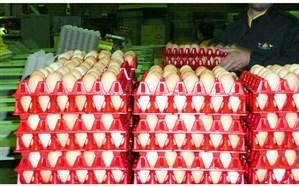 عرضه گسترده تخممرغ در میادین و فروشگاههای زنجیره ای