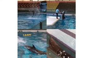 ادعاها در مورد حال بد دلفین برج میلاد کذب است