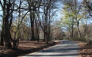 تمامی پارکهای جنگلی فردا تعطیل است