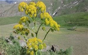 مراقب انتشار آلودگی ویروس کرونا در موقع برداشت گیاهان باشید