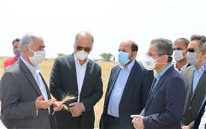 تمامی دستگاههای اجرایی استان بوشهر آماده همکاری در برداشت و ذخیره گندم هستند