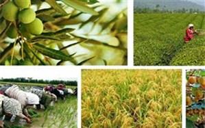 چهار هزار میلیارد تومان خسارت کرونا به بخش کشاورزی