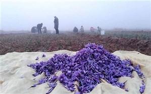 صادرات زعفران متوقف شد