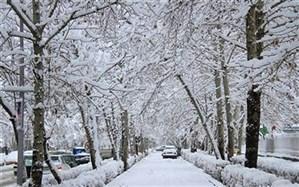 برف بهاری قزوین را سفیدپوش کرد؛ شکوفه ها سوختند