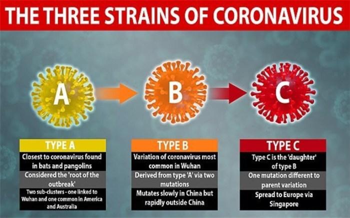 شناسایی ۳ گونه مختلف ویروس کرونا
