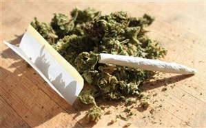 مصرفکنندگان «سیگار»، «ماریجوانا» و «تریاک» بیشتر در معرض ابتلا به «کرونا»