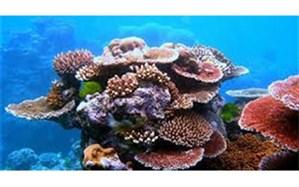 تهیه نقشه صخرههای مرجانی جهان توسط ناسا